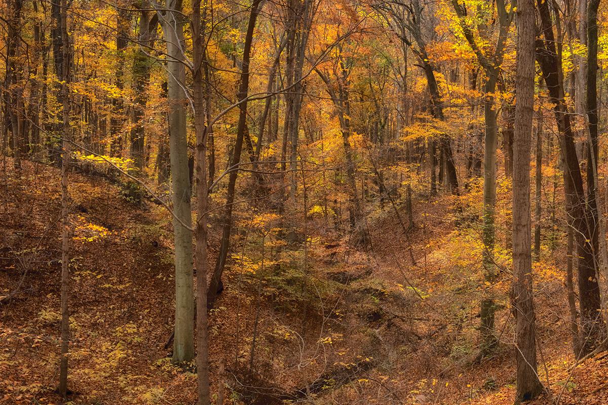 Forest Ravine in Harmonie State Park