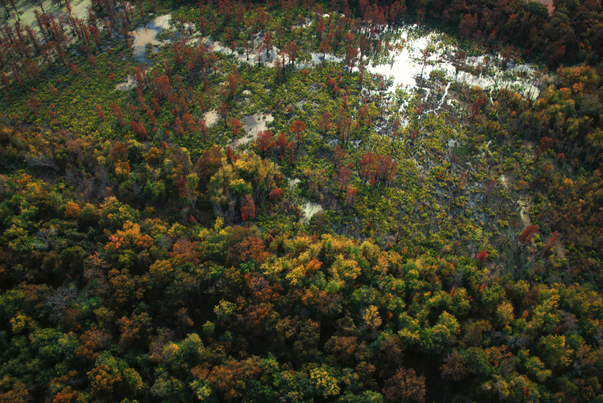 Big Cypress Slough Aerial View