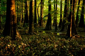 Cypress Slough