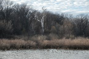 Wabash Lowlands Wetland Conservation Area