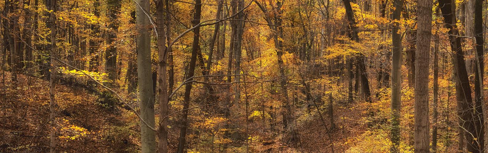 harmonie-state-park-fall-ravine
