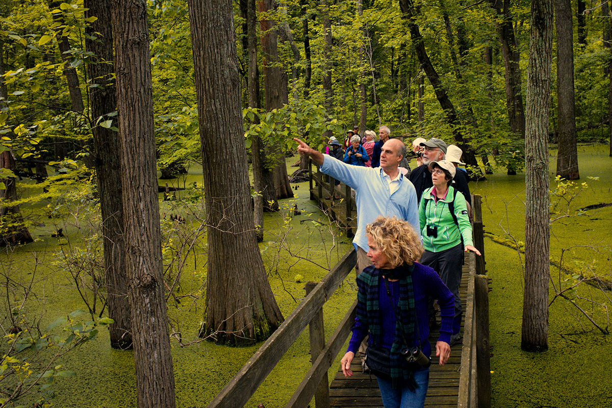 Visitors check out the Cypress trees from the walkway at Twin Swamps in Posey County, Indiana.