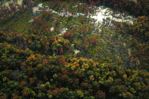 Big Cypress Slough Aerial View