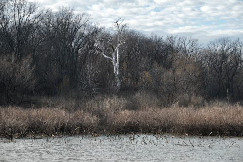 Wabash Lowlands Pond and Forest