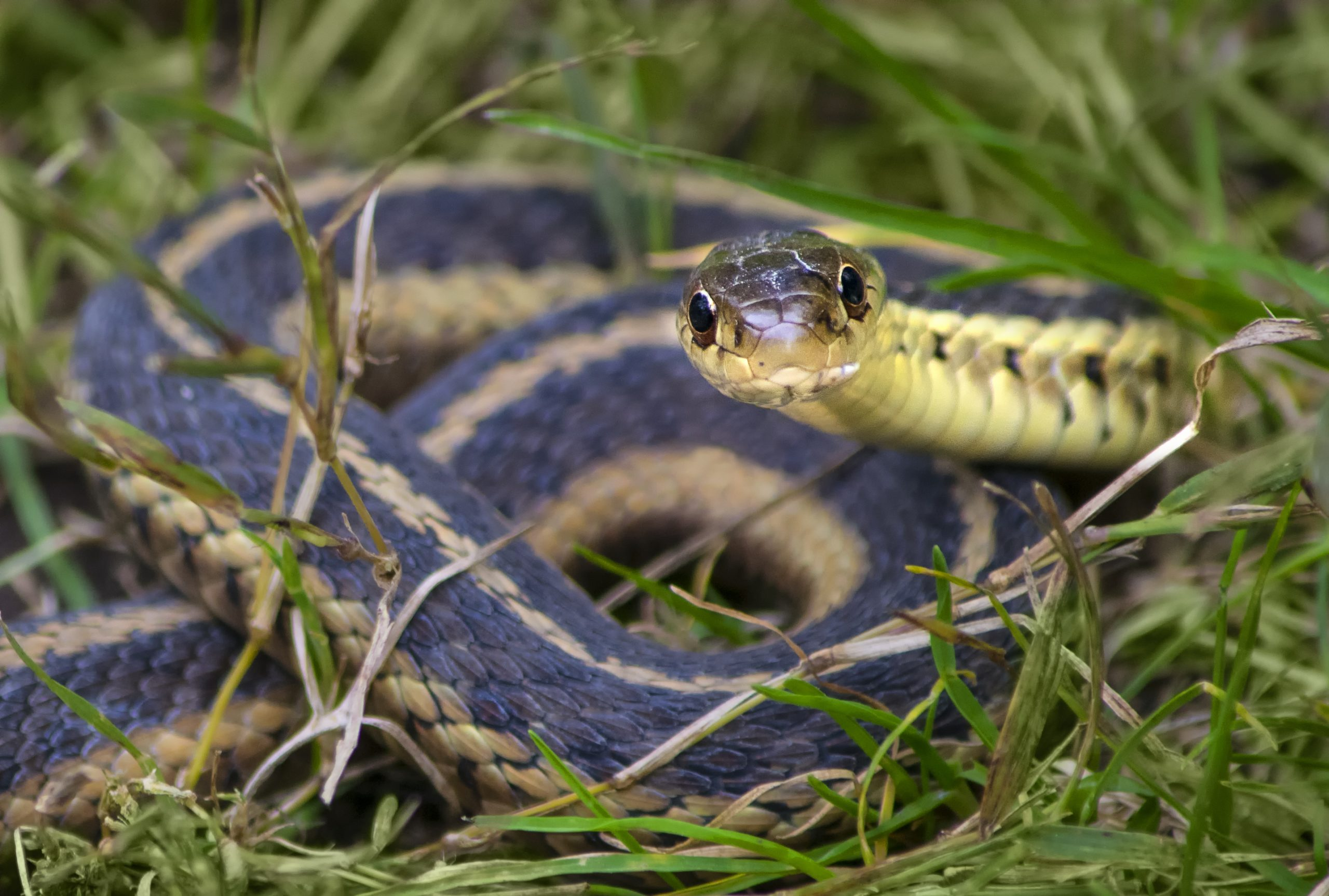 garter snake harmonie state park